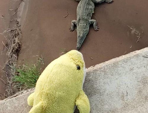 Kruger Park revisited
